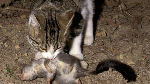 Most Killed Domestic Animal A Dog Or A Cat